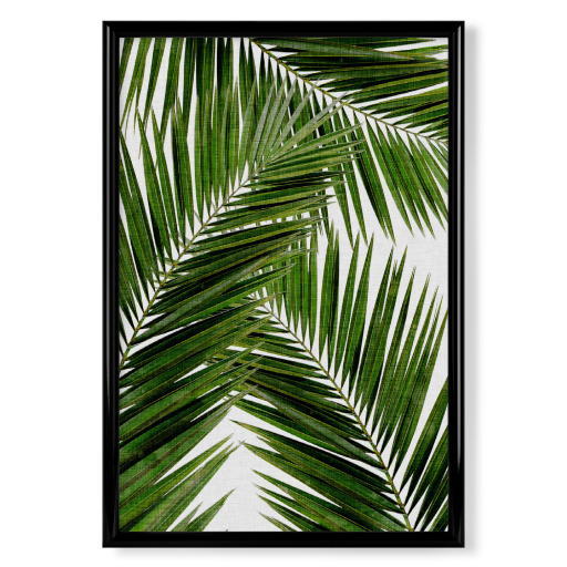 Cohune Palm III Poster