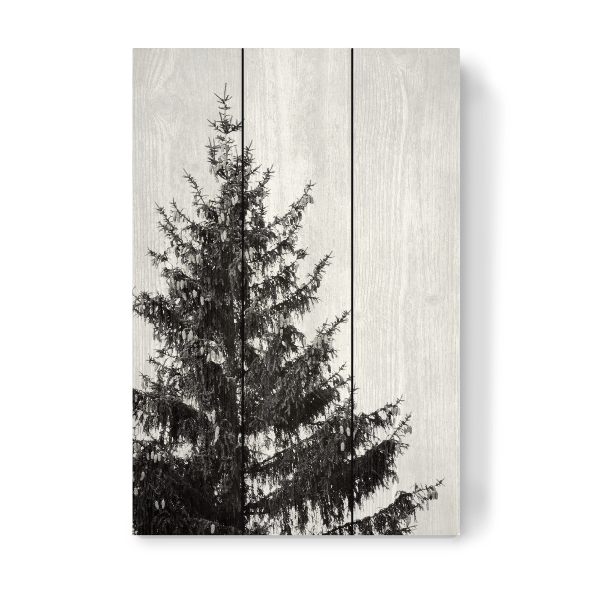 Black And White Pine Tree Left Als Holzbild Bei Artboxone Kaufen