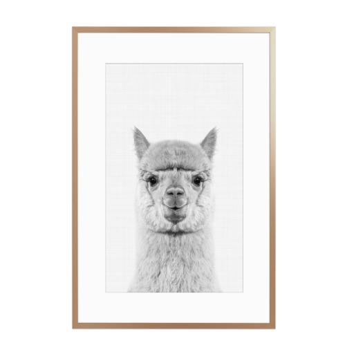 Alpaca Portrait Gerahmt