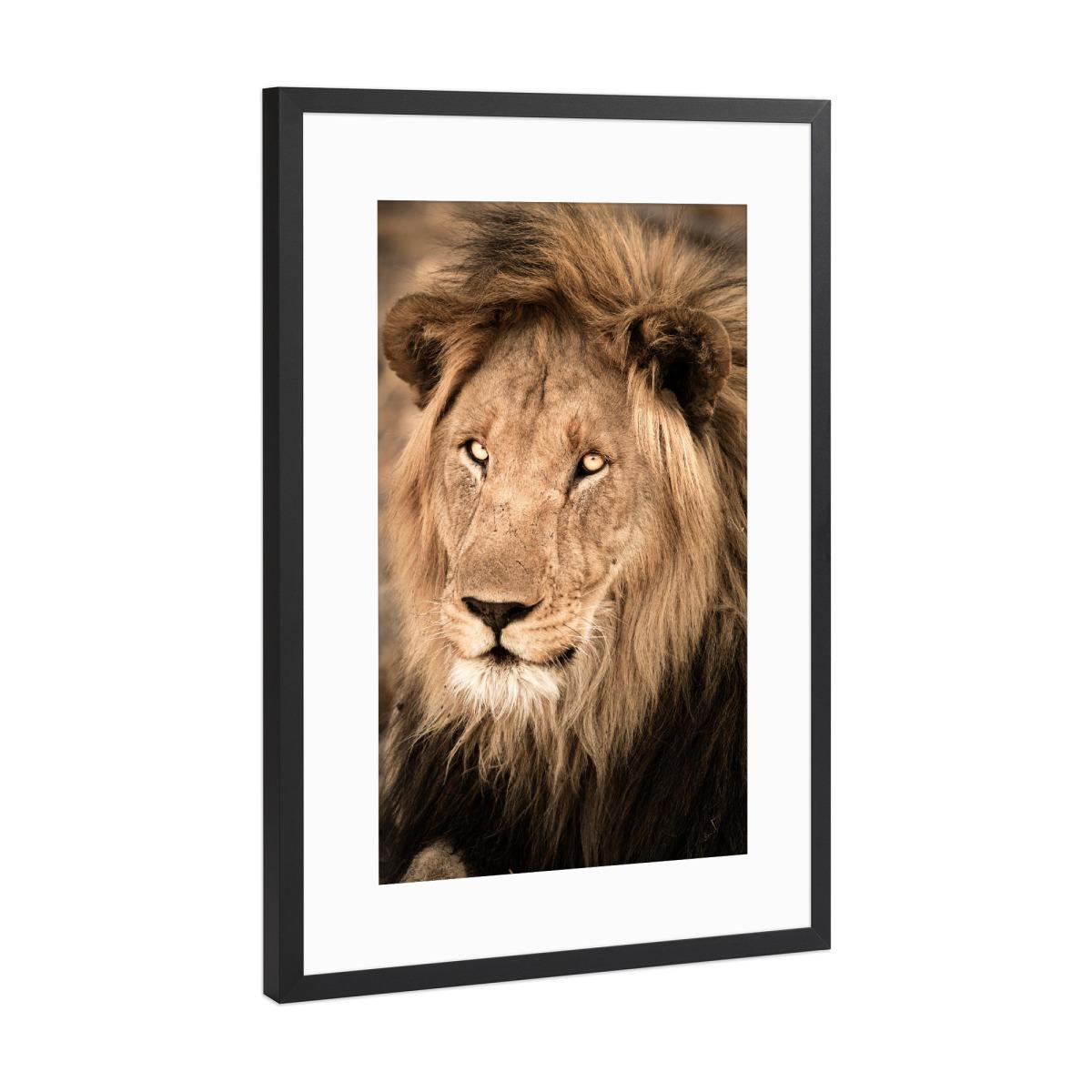 Hübscher Löwe als Gerahmt bei artboxONE kaufen