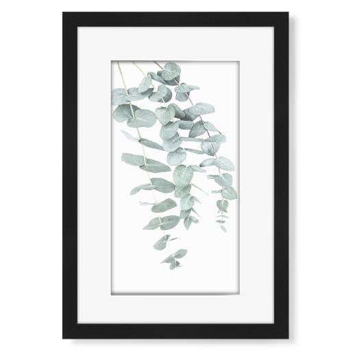 Eucalyptus I Gerahmt