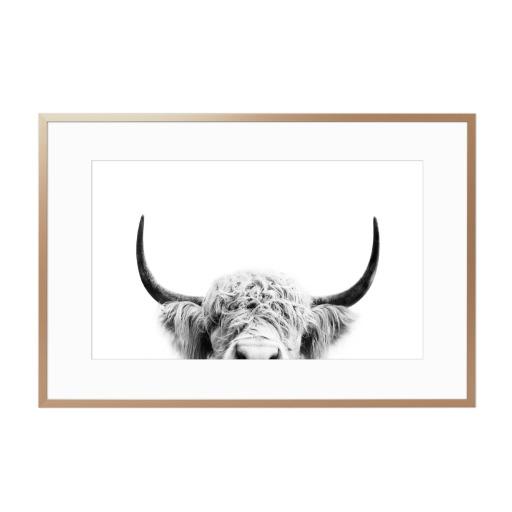 Peeking Cow BW Gerahmt